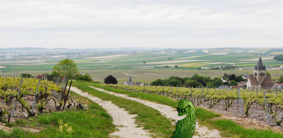 Le Cornichon près de Villedommange (Marne)
