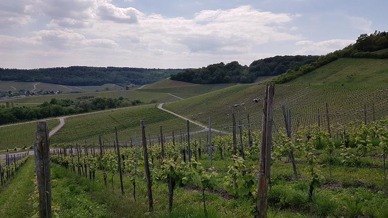 Vue sur le vignoble luxembourgeois