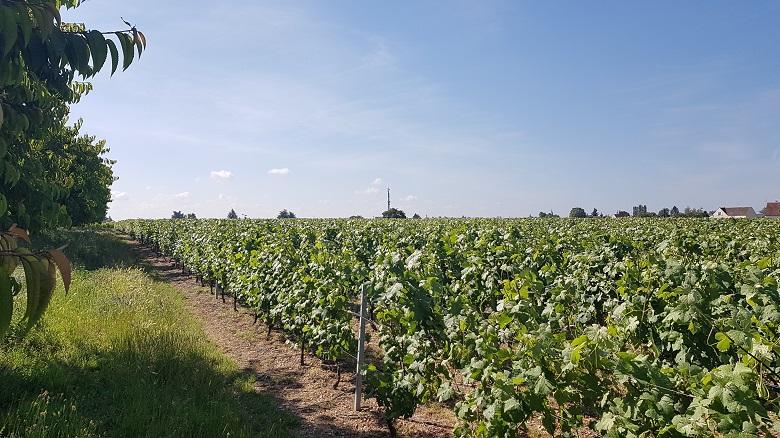 Excellence Chardonnay Clos Saint Fiacre 3