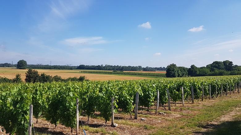 Clos Saint Fiacre vignes voisines
